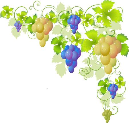 Decorative corner of the vine. Over white. Stock Vector - 6384183