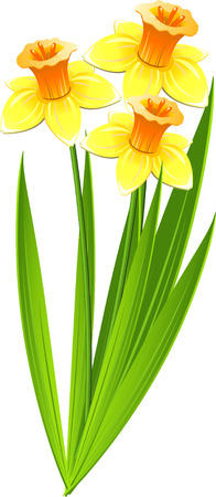 narcissus: Bouquet of daffodils