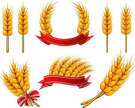 cebada: Trigo Vectores