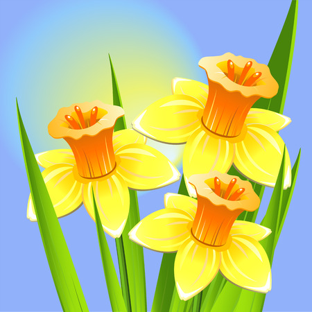 jonquil: Bouquet of daffodils
