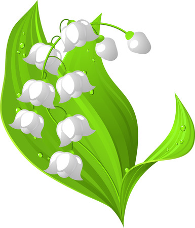 muguet fond blanc: Le muguet  Illustration