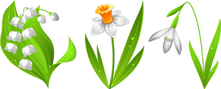 illustration of spring flowers: snowdrop, narcissus, lily of the valley. EPS 8