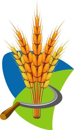 sheaf: Haz de trigo y de la hoz. ilustraci�n. Vectores