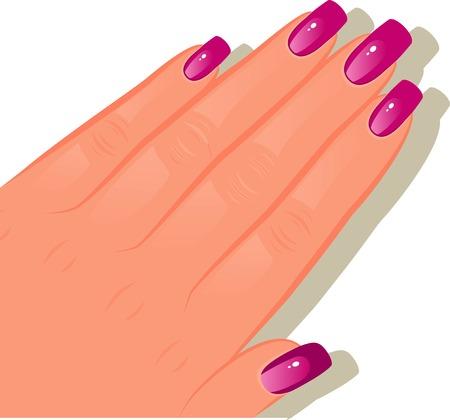 fingernails: Female hand with manicured. EPS 8