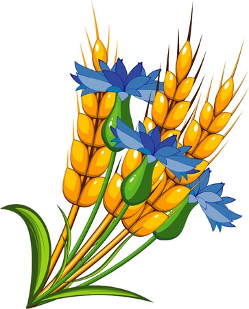 corn stalk: Wheat with cornflowers Illustration