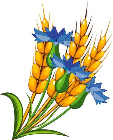 stalk: Wheat with cornflowers Illustration