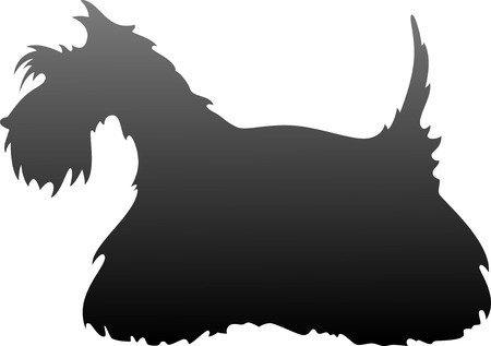 terriers: Scottish Terrier silhouette over white. EPS 8