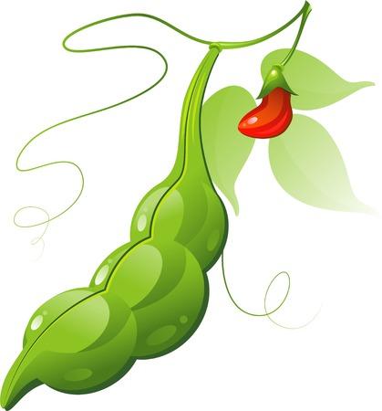 green peas: Bean Pod over white.