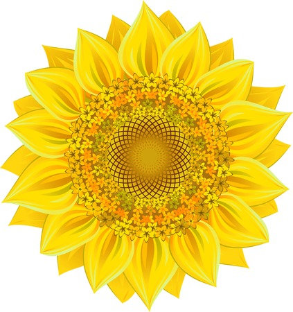Sunflower over white. Vector