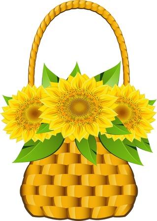 Basket sunflowers over white. Vector