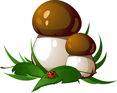 edible mushroom: Ceps in the grass. EPS8 Illustration