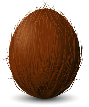 Coconut on a white background.  Illustration