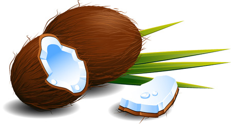 with coconut: Coconuts over white.  Illustration