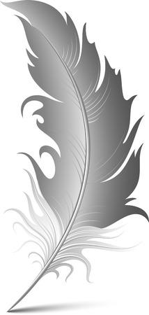 pluma blanca: Vector plumas sobre blanco. EPS 8 Vectores
