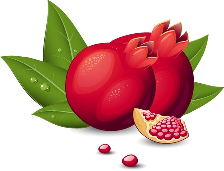 Pomegranate over white. EPS8