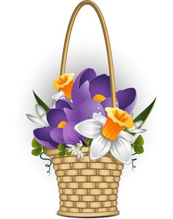 snowdrop: Basket of spring flowers  Illustration