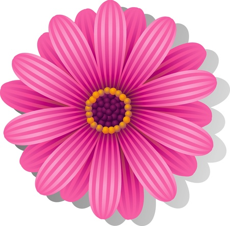 Beautiful pink Gerber Daisy over white. Vector