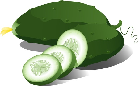 eps 8: Cucumber over white. EPS 8