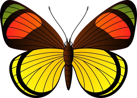 butterfly wings: Beautiful tropical butterfly over white. EPS 8