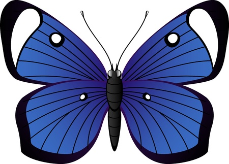 Beautiful tropical butterfly over white. Illustration