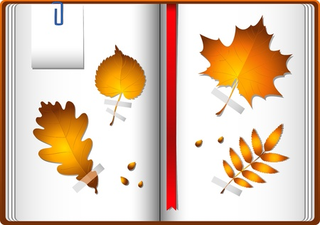 copybook: Autumn leaves in a notebook.