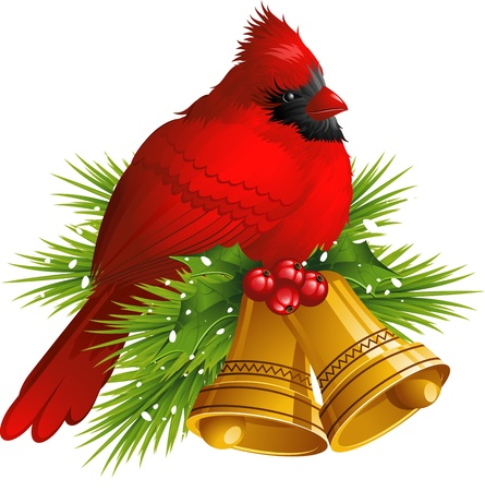 holly leaves: Cardinal Bird with Christmas bells over white.