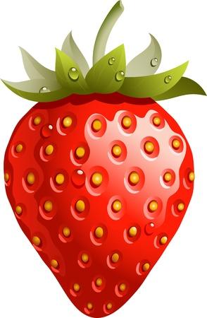 fresa: Fresa madura y rojo aislado en blanco. Vectores