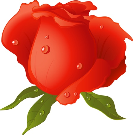 single color image: Red Rose isolated over white.