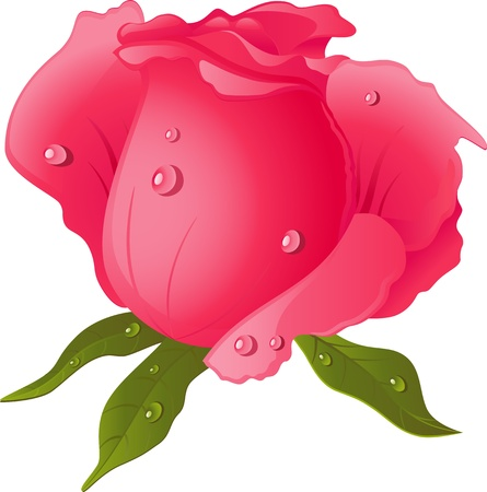 Pink Rose isolated over white. EPS 10 Stock Vector - 11981423