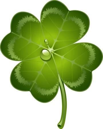 Four-leaf clover over white.