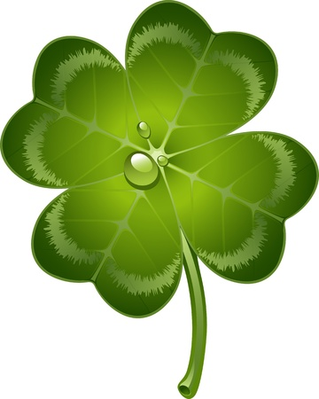 four objects: Four-leaf clover over white.  Illustration