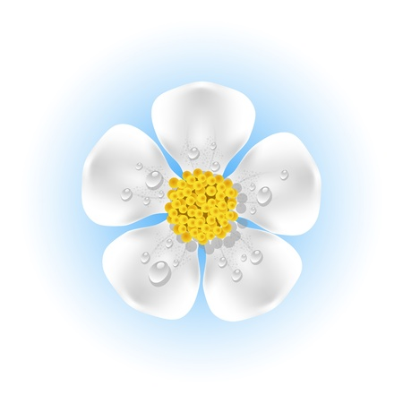 White flower with dew drops. EPS 10 Vector