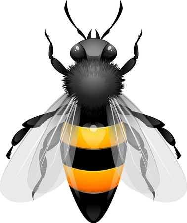 miel de abeja: Miel de Abeja en blanco. Vectores