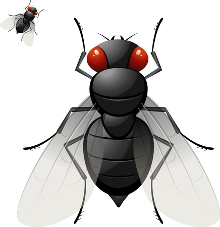 Housefly over white Stock Vector - 13941484