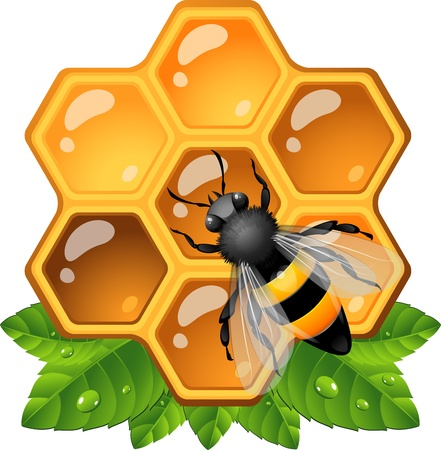 Bee on honeycomb. EPS 10