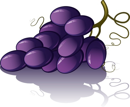 Bunch of grapes .  Vector
