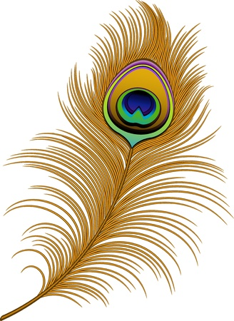 Peacock Feather over white. Vector
