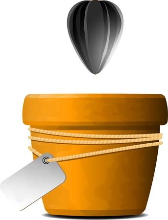 graine tournesol: La graine de tournesol tombe dans un pot de fleurs sur fond blanc.