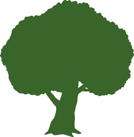 elm: Tree  Silhouette  over white   Illustration