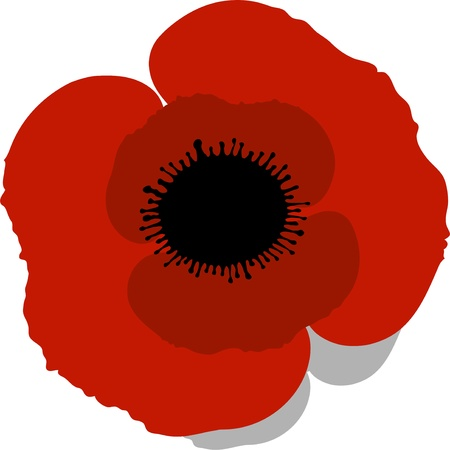 red heads: Red Poppy over white