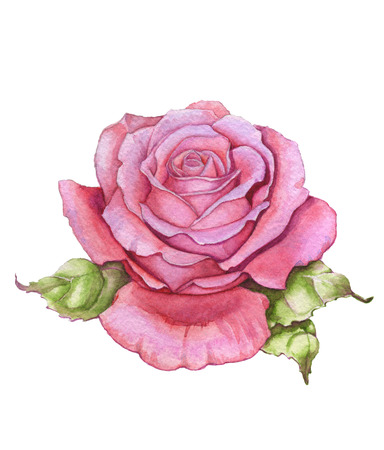 painted image: Watercolor rose over white Stock Photo