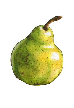 Pear isolated on white. Watercolor illustration illustration