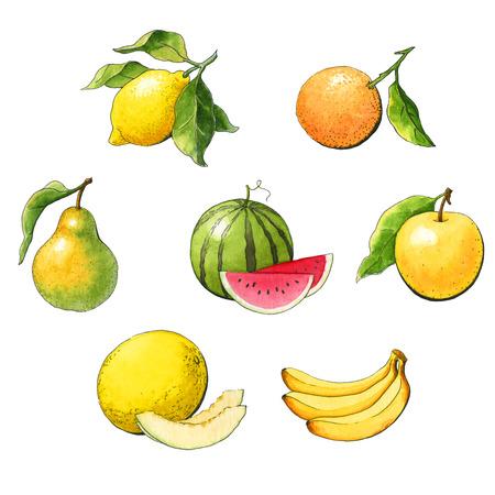 Acuarela establece la fruta en un fondo blanco Foto de archivo - 26857278