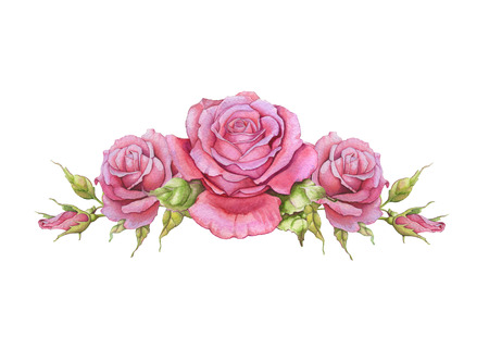 painted image: Watercolor horizontal vignette of roses on a white background