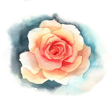 rose coloured: Watercolor rose