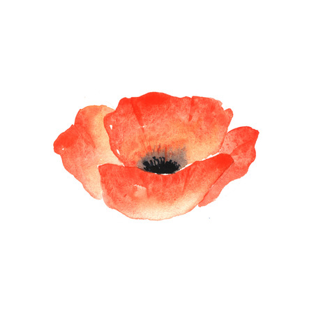 isolated on red: Red poppy. Watercolor illustration on a white background Stock Photo