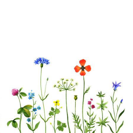 in row: Las flores salvajes en un fondo blanco. ilustración de la acuarela Foto de archivo