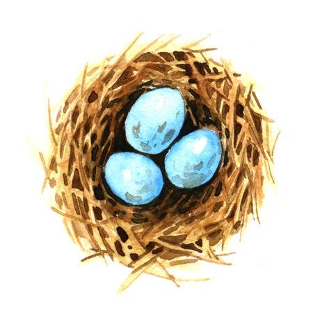 birds nest: Birds nest with eggs. Watercolor illustration