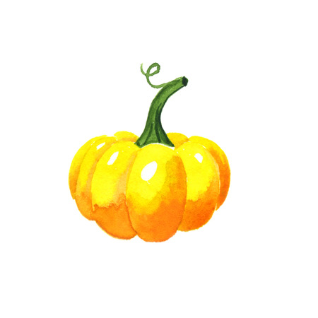 pumpkin: Pumpkin. Watercolor illustration on a white background