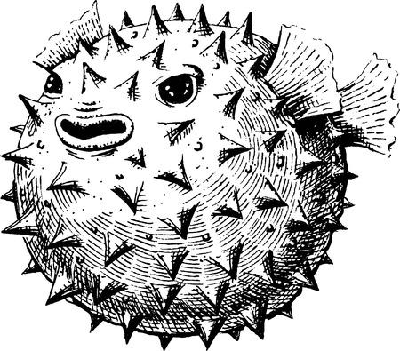 pez globo: Blowfish, ejemplo, bosquejo Vectores